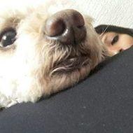 Foto de perfil de karl